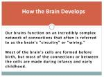 how the brain develops