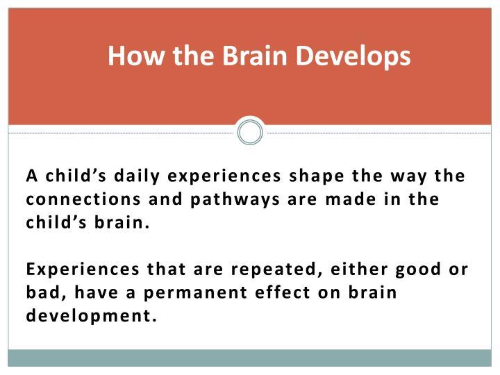 How the Brain Develops