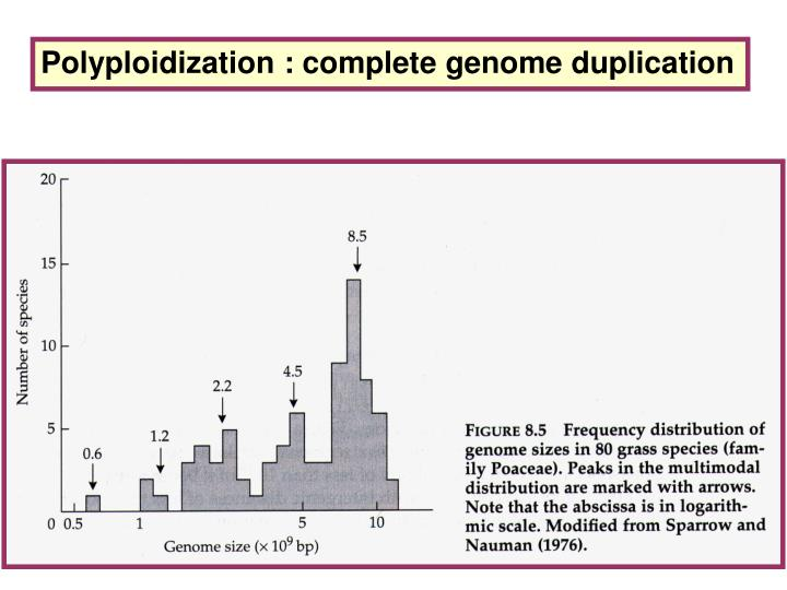 Polyploidization : complete genome duplication
