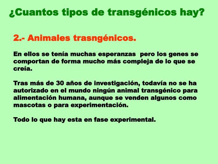 ¿Cuantos tipos de transgénicos hay?