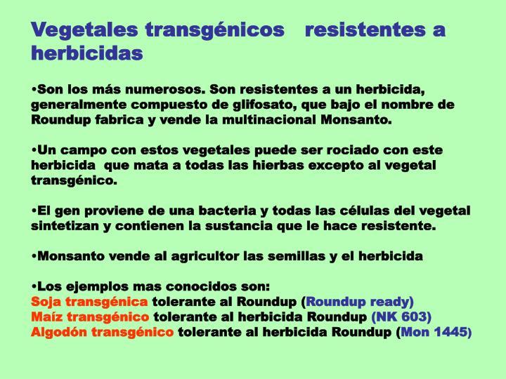 Vegetales transgénicos   resistentes a herbicidas