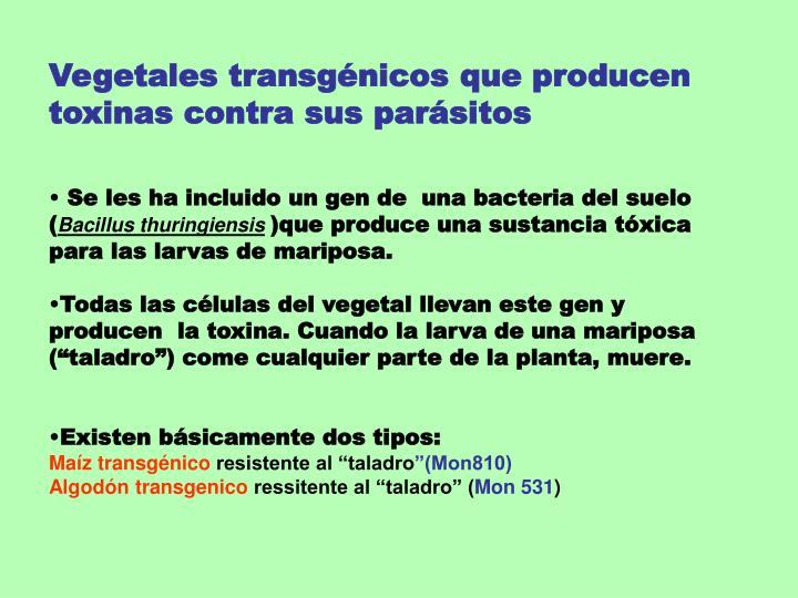Vegetales transgénicos que producen toxinas contra sus parásitos