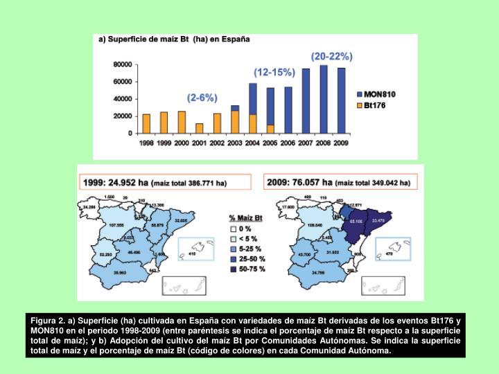 Figura 2. a) Superficie (ha) cultivada en España con variedades de maíz