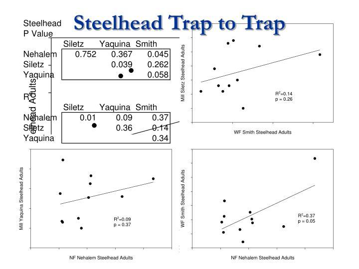 Steelhead Trap to Trap