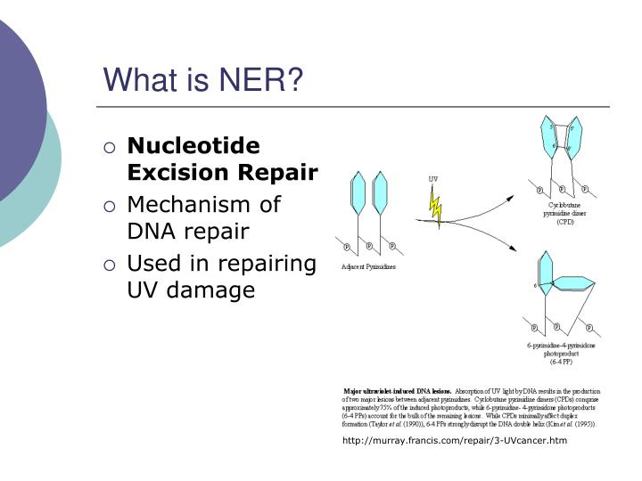 What is NER?
