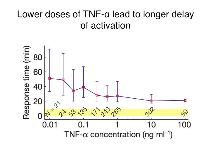 Lower doses of TNF-α lead to longer delay of activation