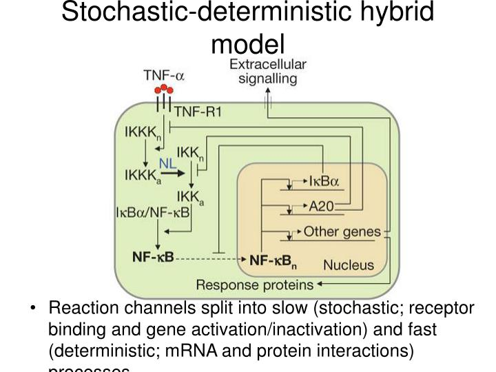 Stochastic-deterministic hybrid model
