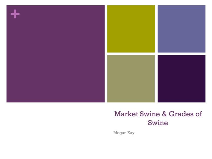 Market Swine & Grades of Swine