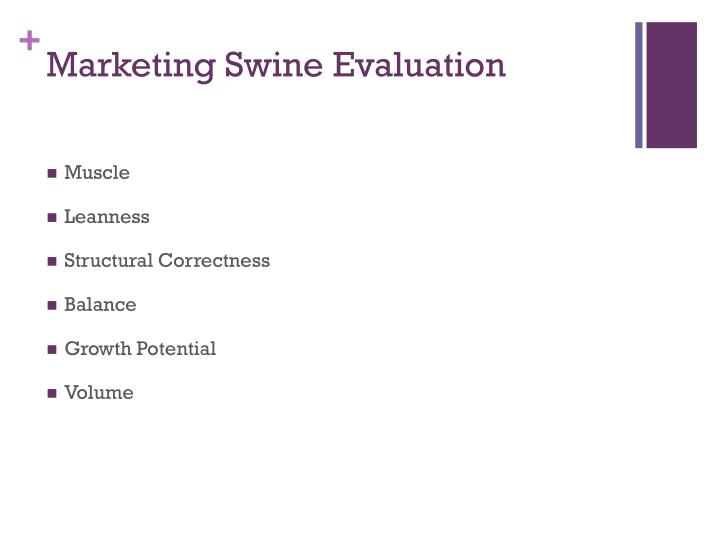 Marketing Swine Evaluation