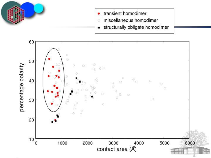 transient homodimer