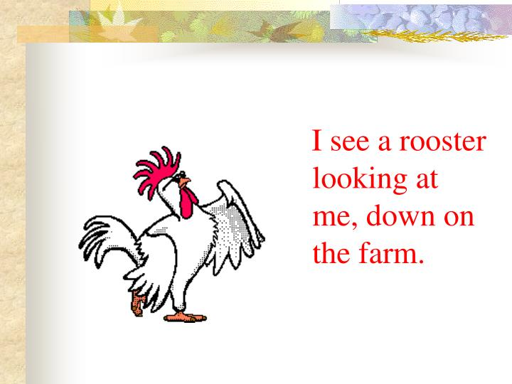 I see a rooster looking at me, down on the farm.