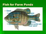 fish for farm ponds