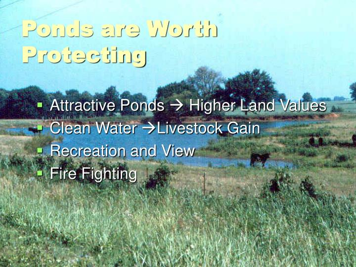 Ponds are worth protecting