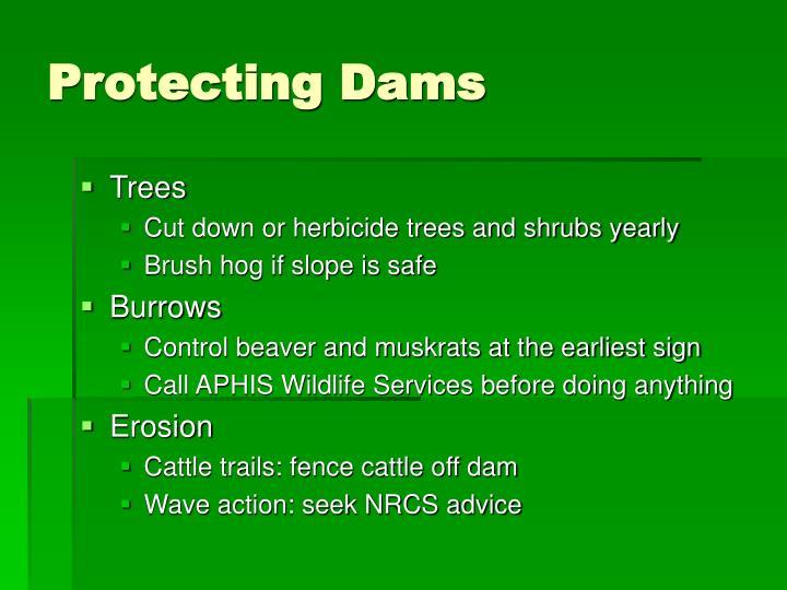 Protecting Dams