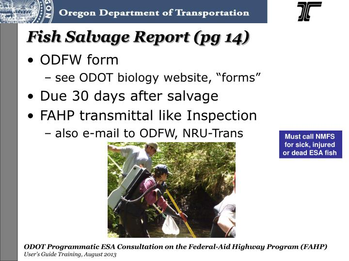 Fish Salvage Report (pg 14)
