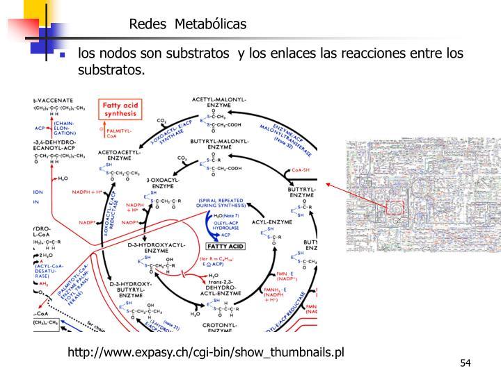 Redes  Metab