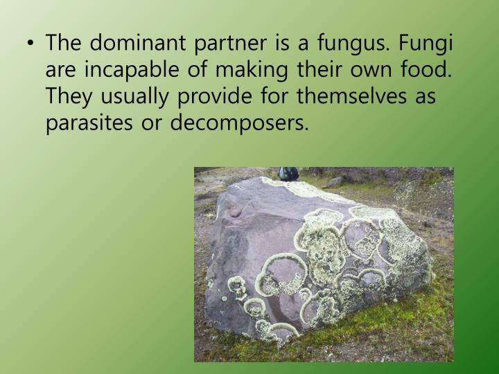 The dominant partner is a fungus. Fungi are incapable of making their own food. They usually provide for themselves as parasites or decomposers.
