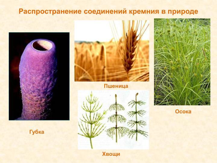 Распространение соединений кремния в природе