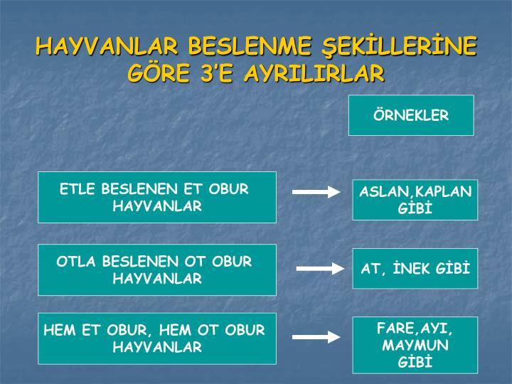 HAYVANLAR BESLENME ŞEKİLLERİNE GÖRE 3'E AYRILIRLAR
