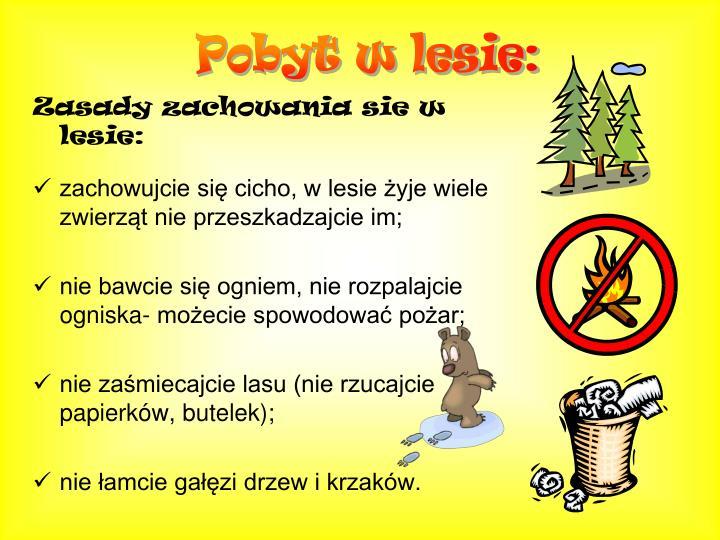 Pobyt w lesie:
