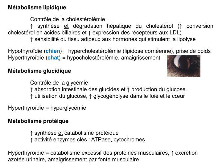Métabolisme lipidique