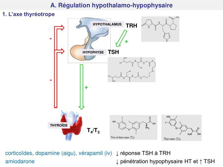 A. Régulation hypothalamo-hypophysaire