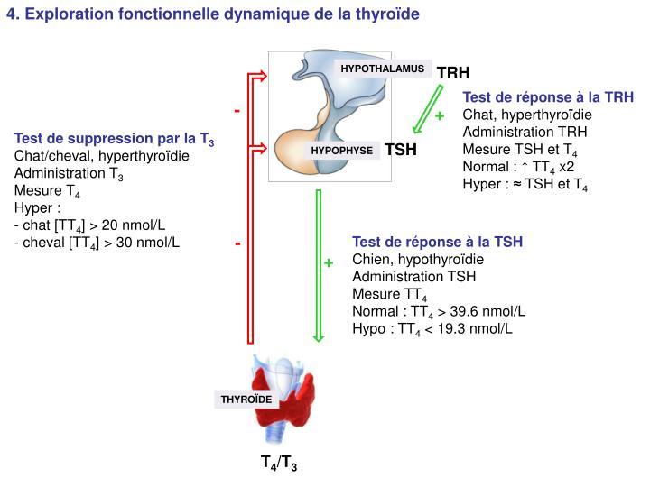 4. Exploration fonctionnelle dynamique de la thyroïde
