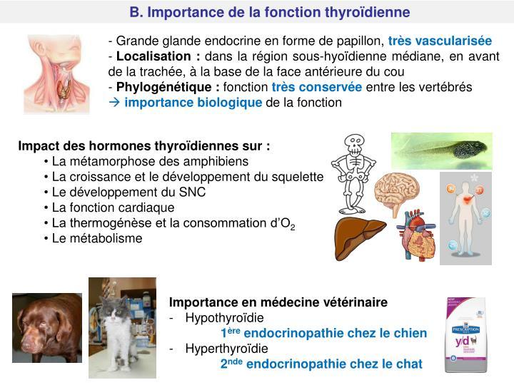 B. Importance de la fonction thyroïdienne
