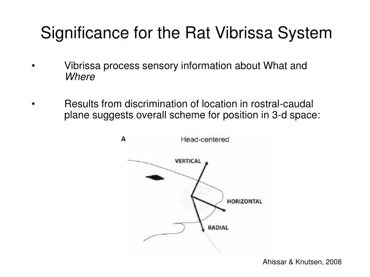 Significance for the Rat Vibrissa System