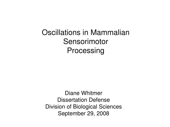 Oscillations in Mammalian