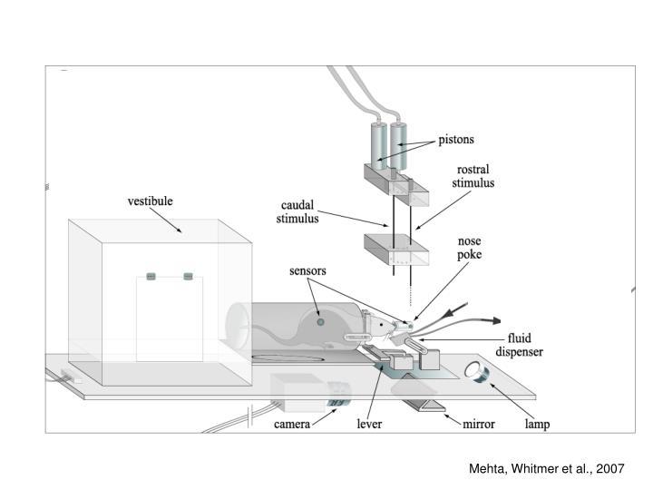 Mehta, Whitmer et al., 2007