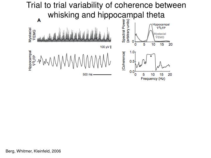 Trial to trial variability of coherence between whisking and hippocampal theta