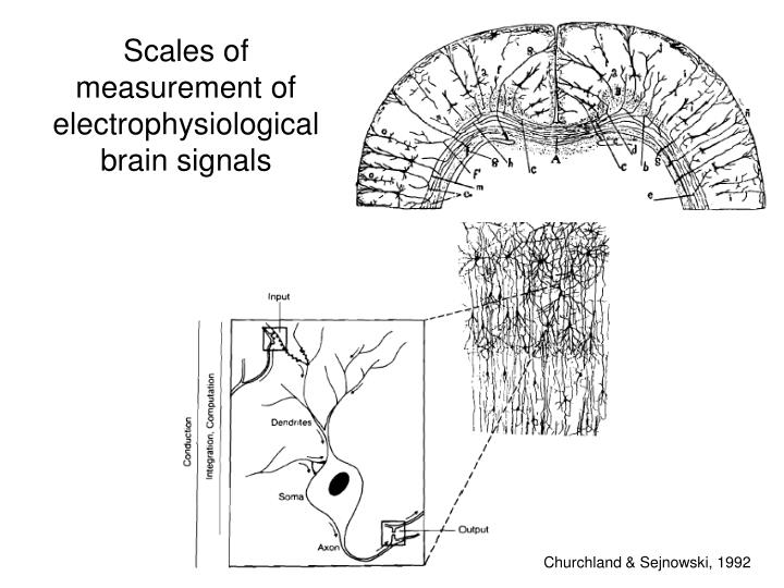 Scales of measurement of electrophysiological brain signals
