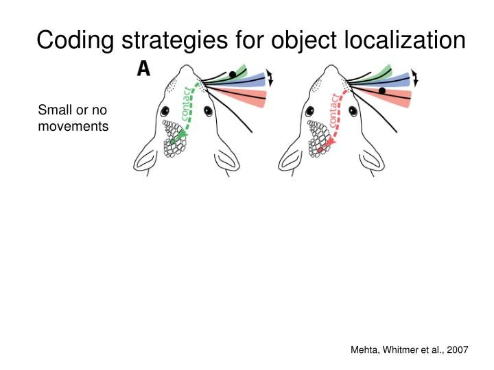 Coding strategies for object localization