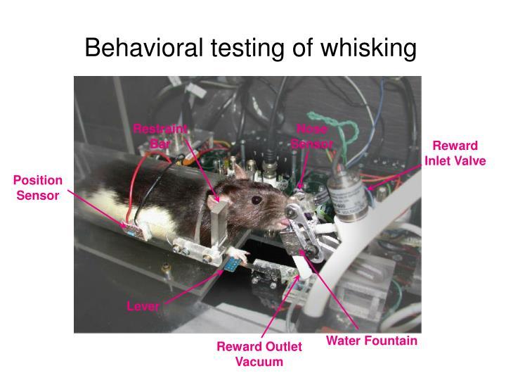 Behavioral testing of whisking