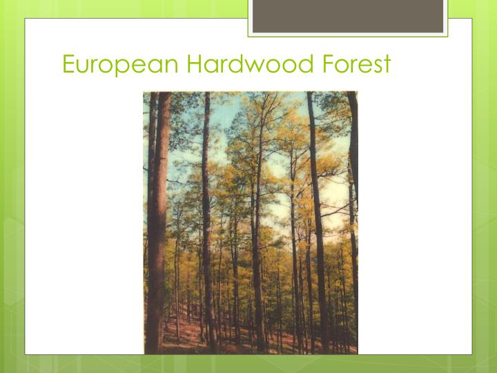European Hardwood Forest