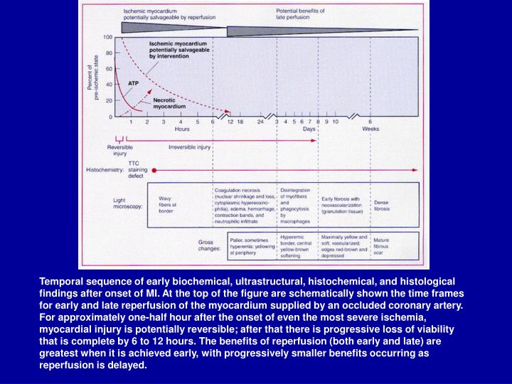 Temporal sequence of early biochemical, ultrastructural, histochemical, and histological findings after onset of MI. At the top of the figure are schematically shown the time frames for early and late reperfusion of the myocardium supplied by an occluded coronary artery. For approximately one-half hour after the onset of even the most severe ischemia, myocardial injury is potentially reversible; after that there is progressive loss of viability that is complete by 6 to 12 hours. The benefits of reperfusion (both early and late) are greatest when it is achieved early, with progressively smaller benefits occurring as reperfusion is delayed.