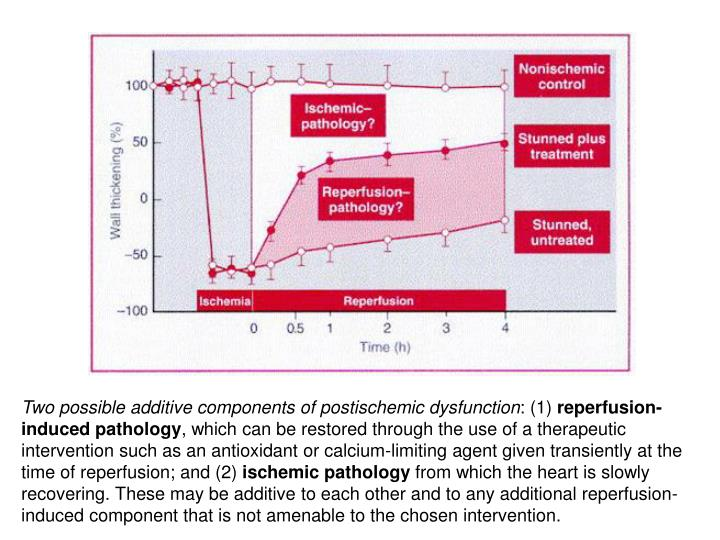 Two possible additive components of postischemic dysfunction