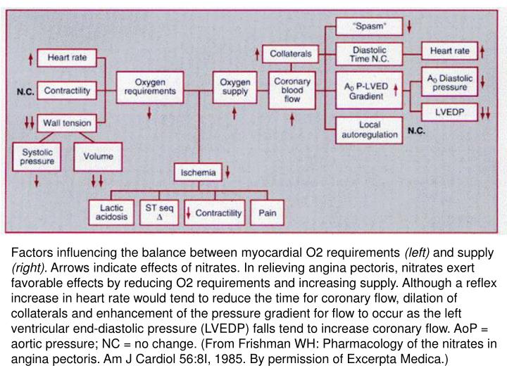 Factors influencing the balance between myocardial O2 requirements