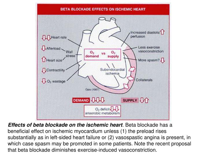 Effects of beta blockade on the ischemic heart