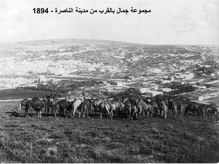 مجموعة جِمال بالقرب من مدينة الناصرة