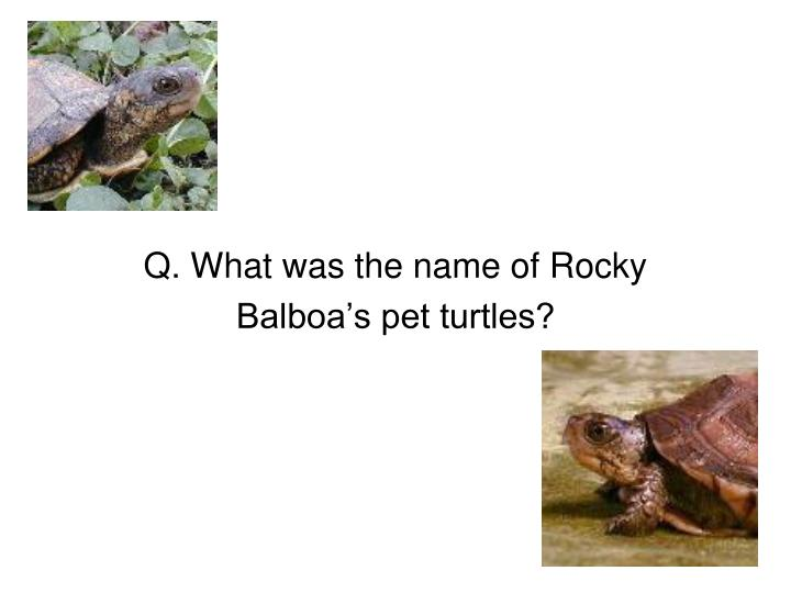Q. What was the name of Rocky