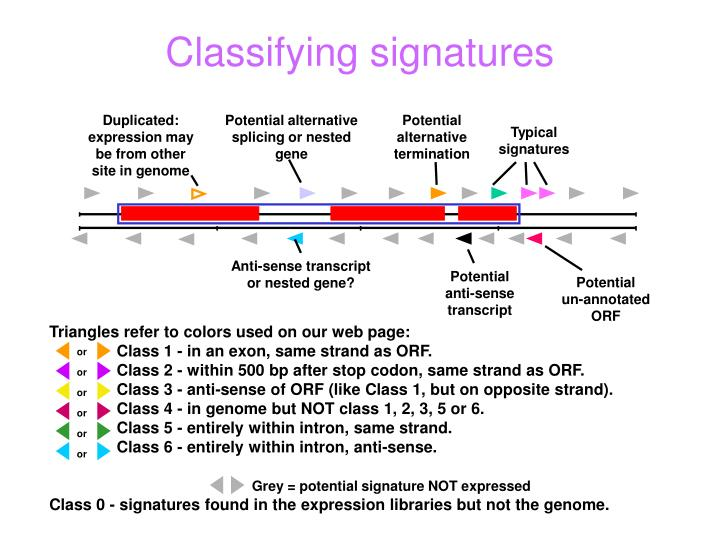 Duplicated: expression may be from other site in genome