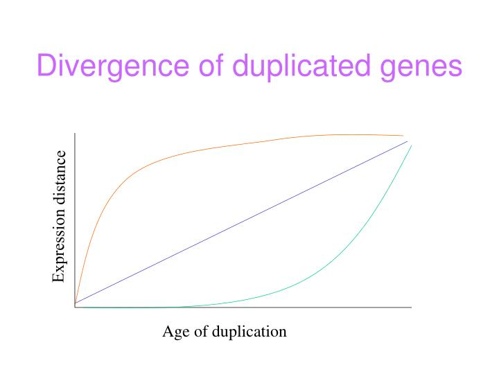 Divergence of duplicated genes
