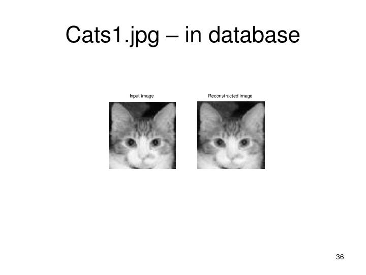 Cats1.jpg – in database