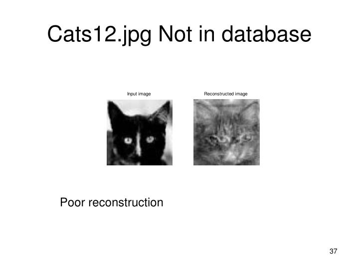 Cats12.jpg Not in database