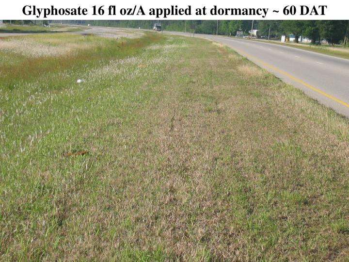 Glyphosate 16 fl oz/A applied at dormancy ~ 60 DAT