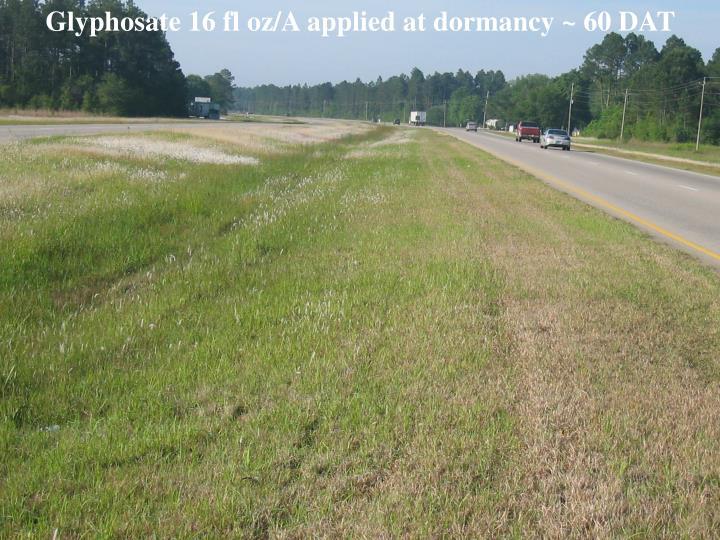 Glyphosate 16 fl oz/A applied at dormancy ~ 60 DAT