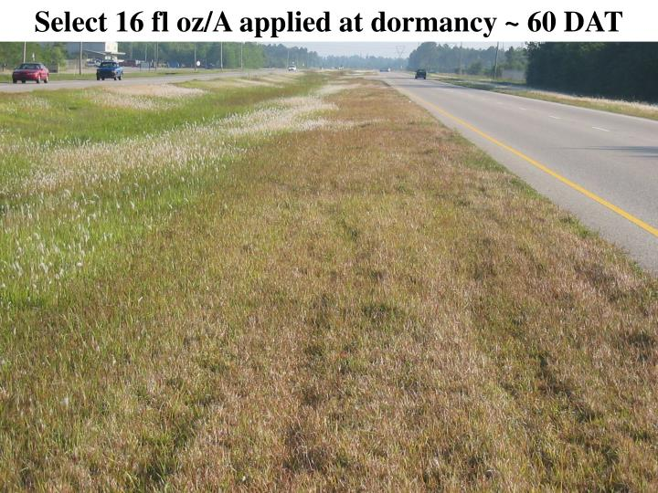 Select 16 fl oz/A applied at dormancy ~ 60 DAT