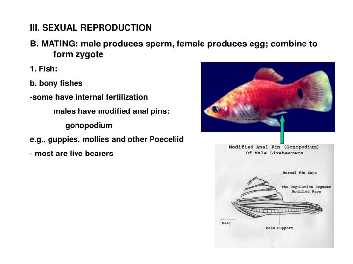 III. SEXUAL REPRODUCTION